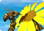 Arılar'ın inanılmaz bir yeteneği daha